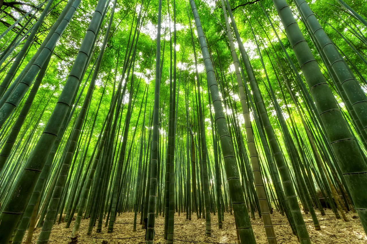 bamboo wood alternative is bamboo sustainable