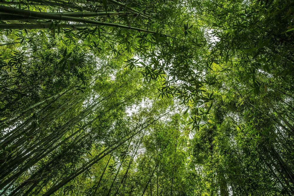 Bamboo blog post series by Nicola Hasted health & tech writer
